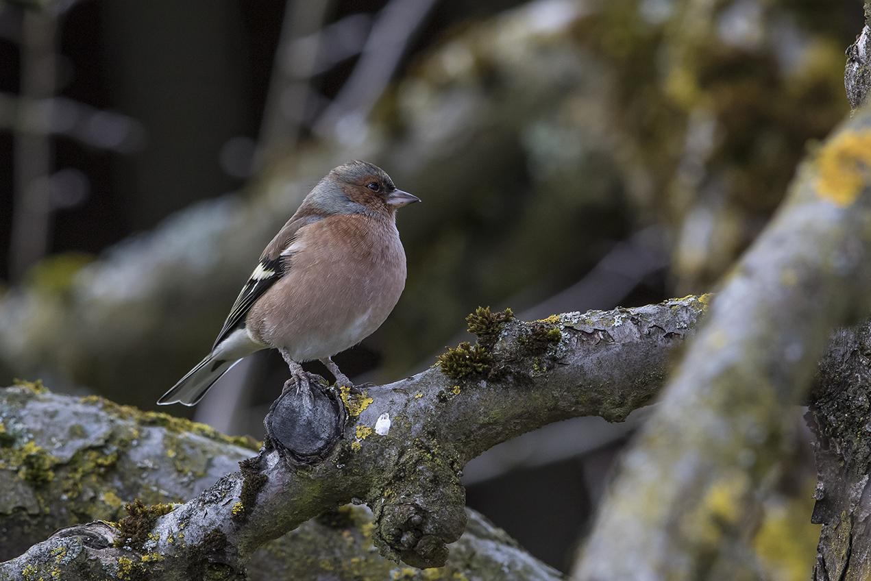 Zeitgeist Hringen einheimische vögel rene rohr foto ch